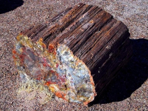 PetrifiedWood