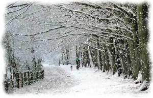 XMAS-SNOW-BEAUTIFUL-SCENIC