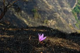 fire flower 3