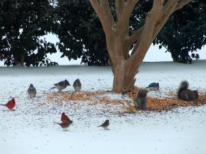 snow and birds