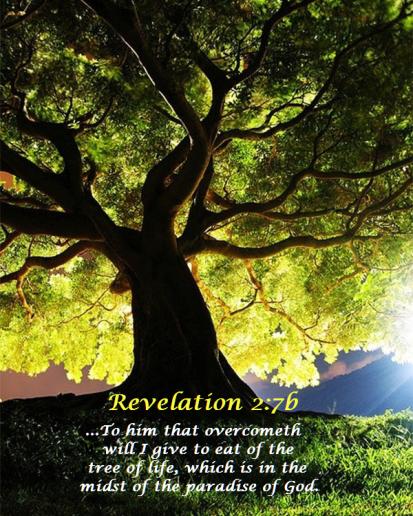 tree_of_life_rev_2-6.35272432_std
